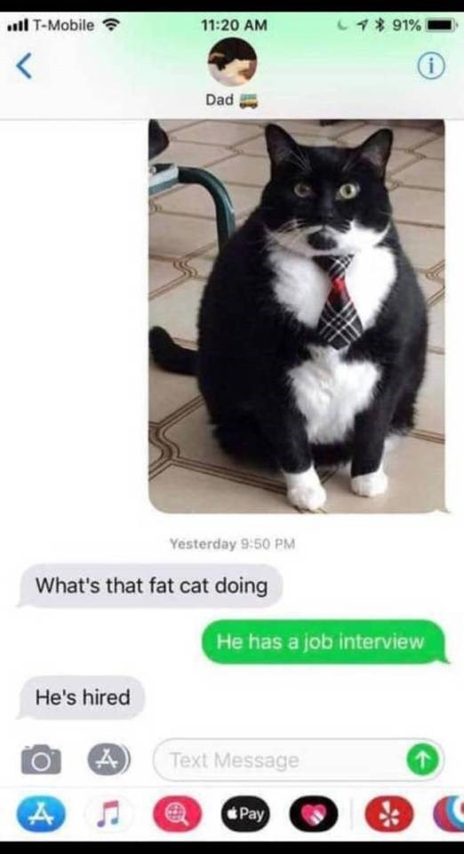 Cat - 491% l T-Mobile 11:20 AM i Dad Yesterday 9:50 PM What's that fat cat doing He has a job interview He's hired Text Message Pay