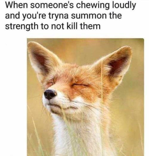 Mammal - When someone's chewing loudly and you're tryna summon the strength to not kill them
