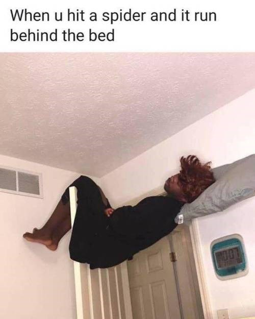 Ceiling - When u hit a spider and it run behind the bed ROOT