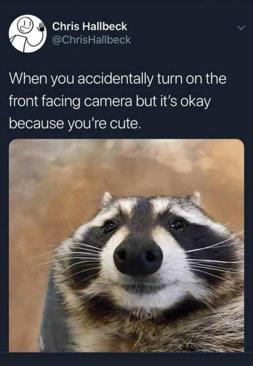 Procyon - Chris Hallbeck @ChrisHallbeck When you accidentally turn on the front facing camera but it's okay because you're cute.