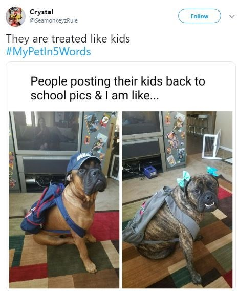 Dog breed - Crystal Follow @SeamonkeyzRule They are treated like kids #MyPetln5Words People posting their kids back to school pics & I am like...