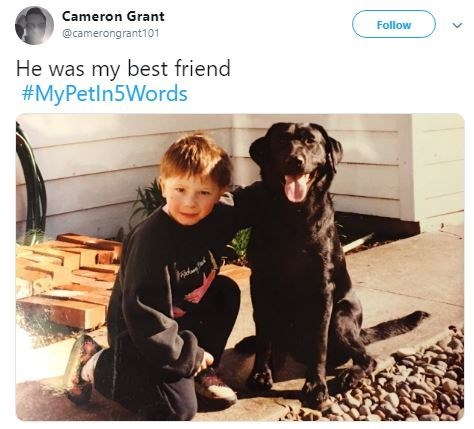 Dog - Cameron Grant Follow @camerongrant101 He was my best friend #MyPetln5Words