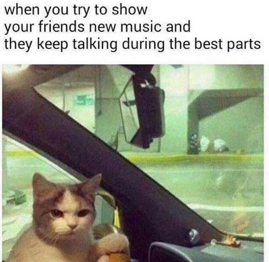 Cat - when you try to show your friends new music and they keep talking during the best parts