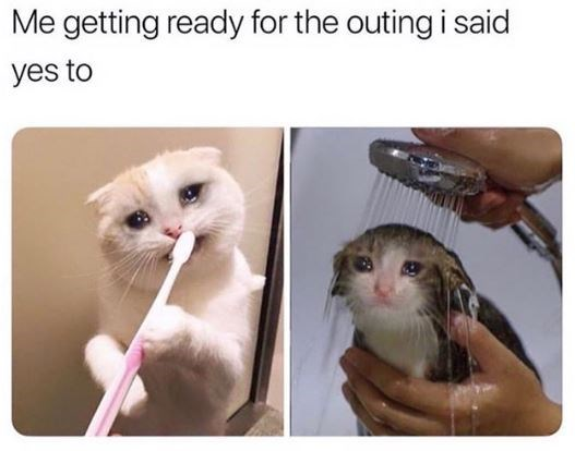 Cat - Me getting ready for the outing i said yes to