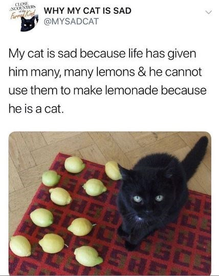 Cat - CLOSE NOOUNTERS rdWHY MY CAT IS SAD @MYSADCAT My cat is sad because life has given him many, many lemons & he cannot use them to make lemonade because he is a cat.