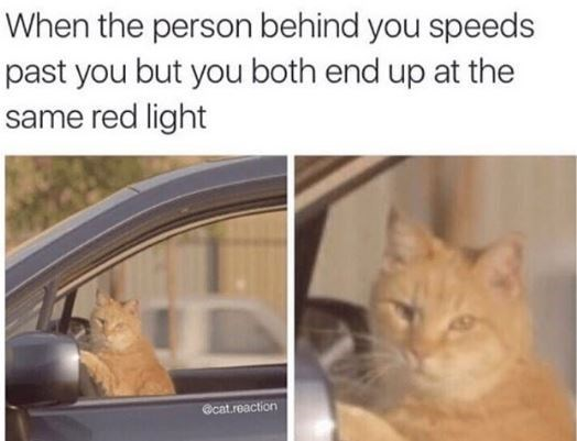 Cat - When the person behind you speeds past you but you both end up at the same red light @cat.reaction