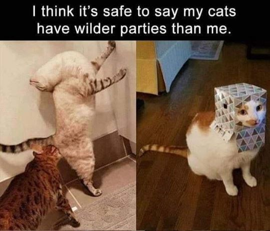 Cat - I think it's safe to say my cats have wilder parties than