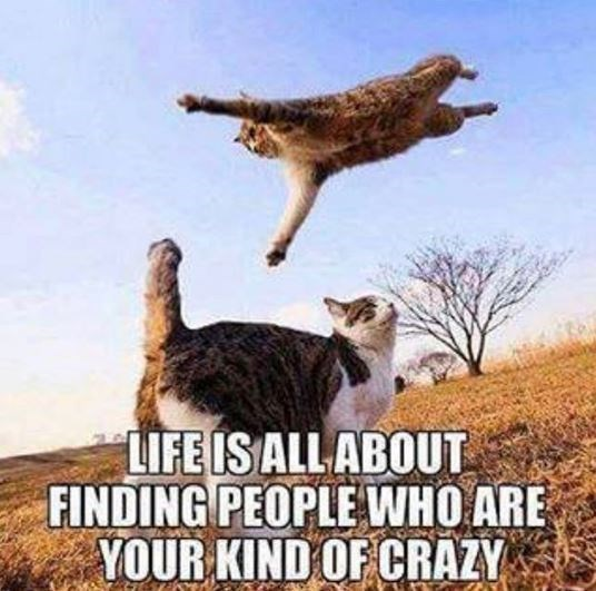 Photo caption - LIFE IS ALL ABOUT FINDING PEOPLE WHO ARE YOUR KIND OF CRAZY