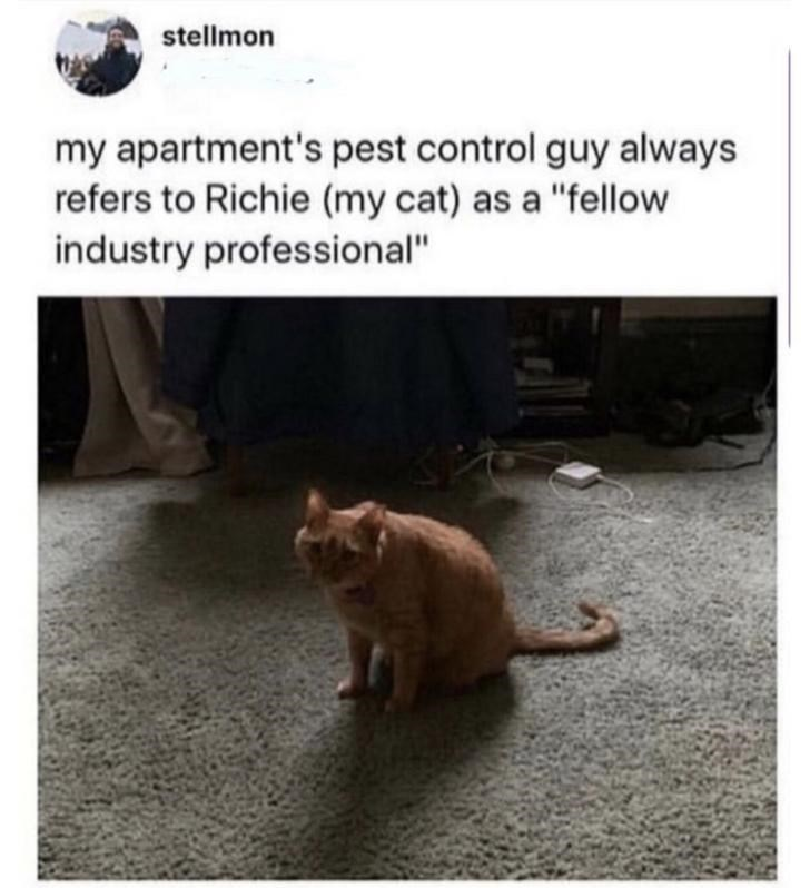 """Cat - stellmon my apartment's pest control guy always refers to Richie (my cat) as a """"fellow industry professional"""""""