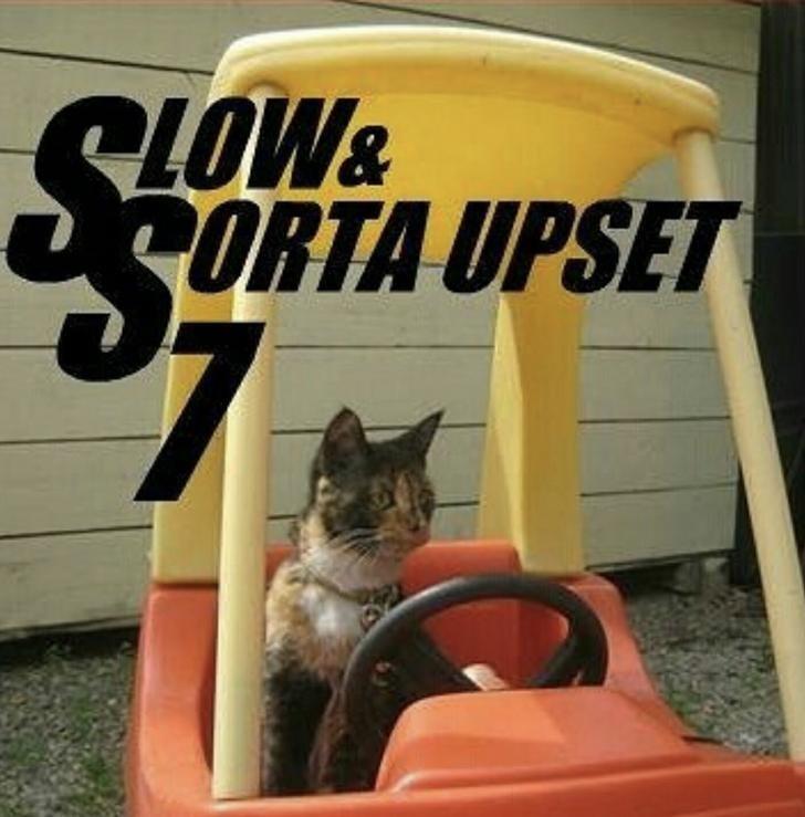 Cat - RLOW& ORTA UPSET