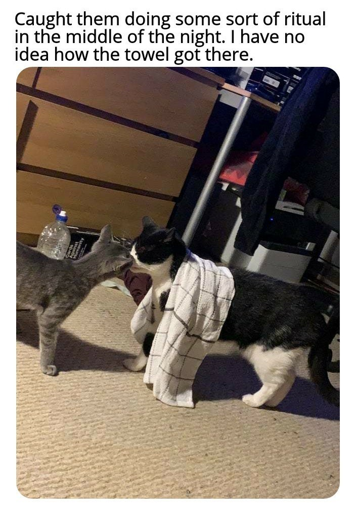 Photo caption - Caught them doing some sort of ritual in the middle of the night. I have no idea how the towel got there.