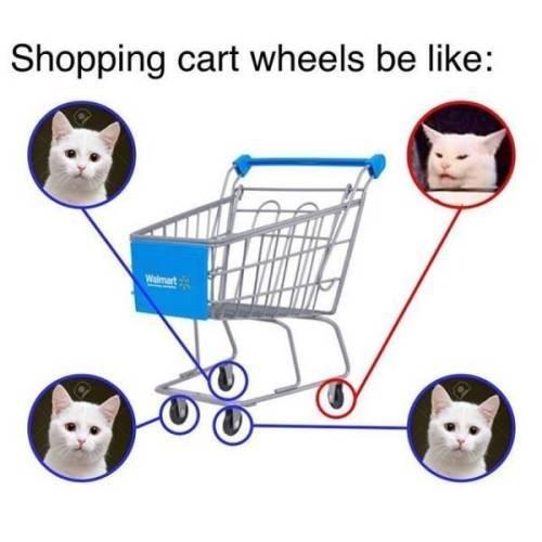 cat memes - 9358609152
