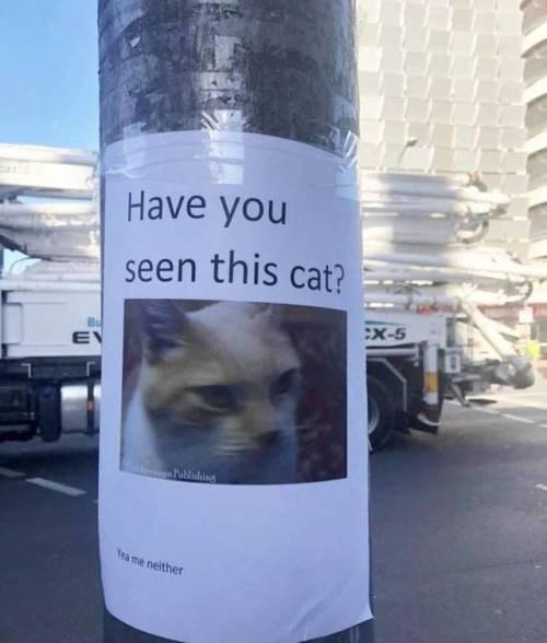 cat memes - 9358613760