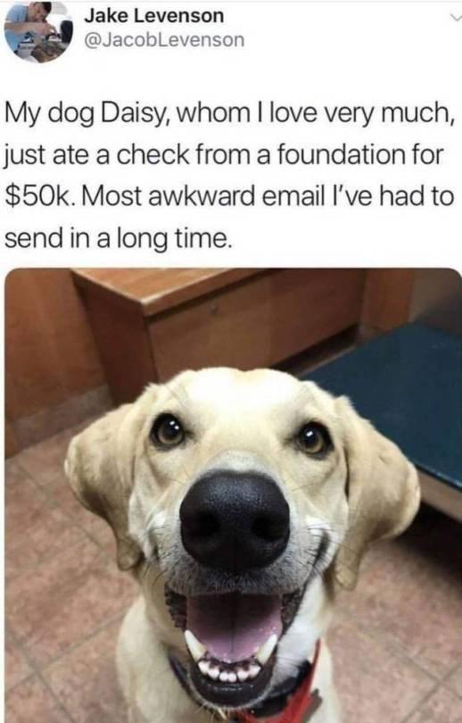 dog memes - 9358615040