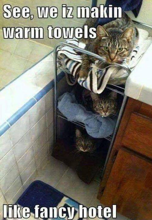 cat memes - 9358656000