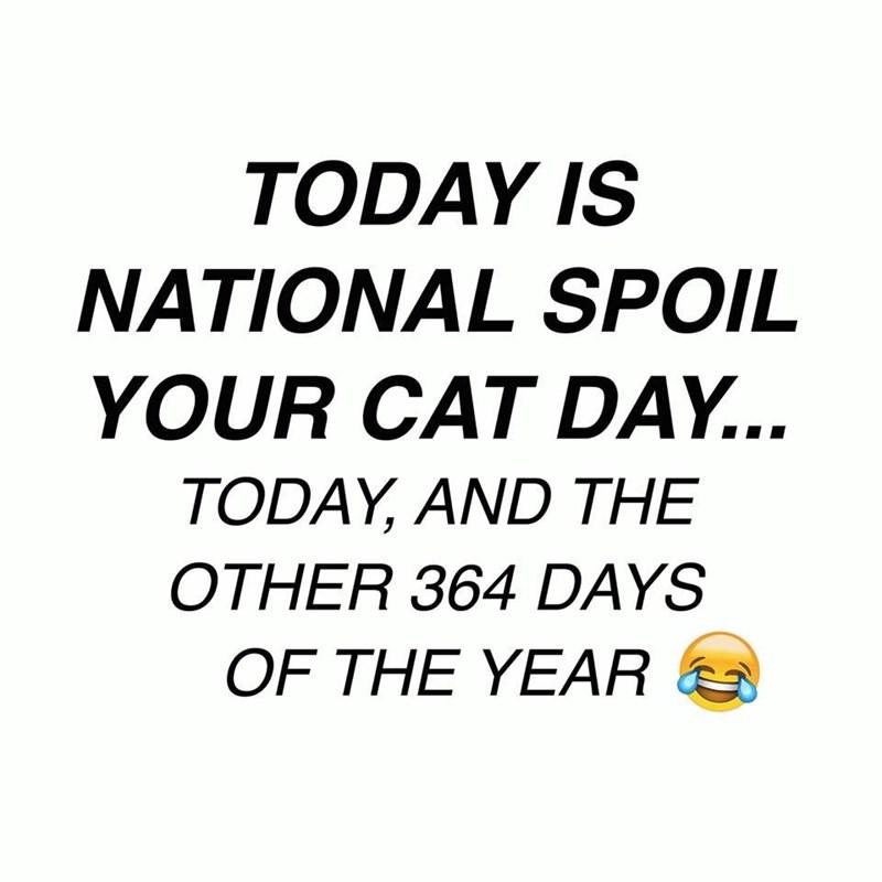 cat memes - 9358660608