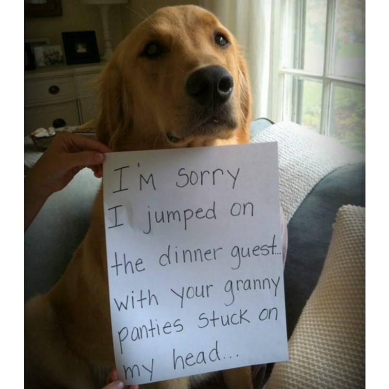 Dog - IM Sorry jumped on the dinner quest With your grannyY panties Stuck an my head..