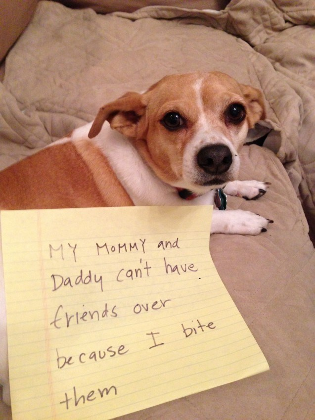 Dog - MY MOMMY and Daddy cant have trtends Over be cause I bite them
