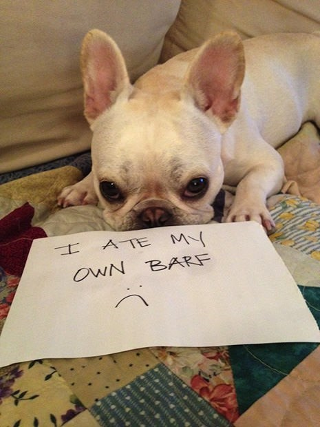 Dog - A TE M OWN BARF