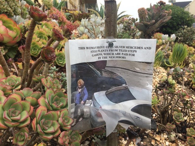 Plant community - THIS WOMANDROVE UPN SILVER MERCEDES AND STOLE PLANTS FROM TILED STEPS GARDENS, WHICH ARE PAID FOR BY THE NEIGHBORS