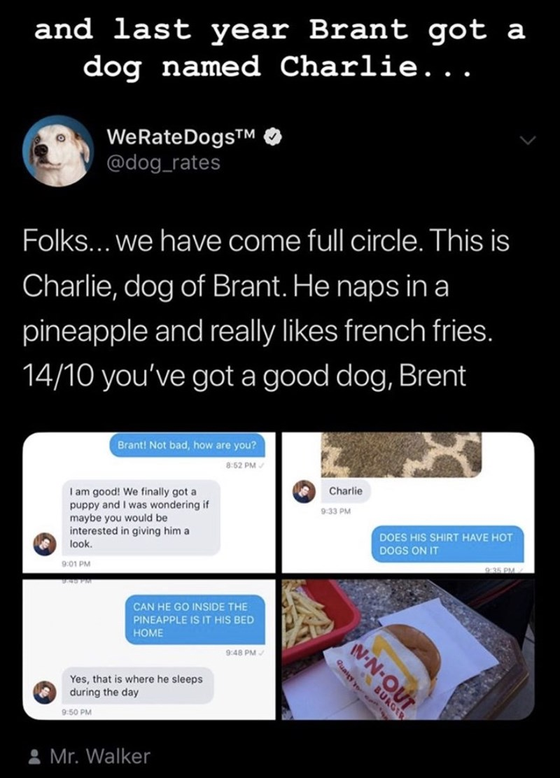 Text - and last year Brant got a dog named Charlie... WeRateDogsM @dog_rates Folks... we have come full circle. This is Charlie, dog of Brant. He naps in a pineapple and really likes french fries. 14/10 you've got a good dog, Brent Brant! Not bad, how are you? 8:52 PM I am good! We finally got a puppy and I was wondering if maybe you would be interested in giving him a look Charlie 9:33 PM DOES HIS SHIRT HAVE HOT DOGS ON IT 9:01 PM 9:35 PM. CAN HE GO INSIDE THE PINEAPPLE IS IT HIS BED HOME 9:48