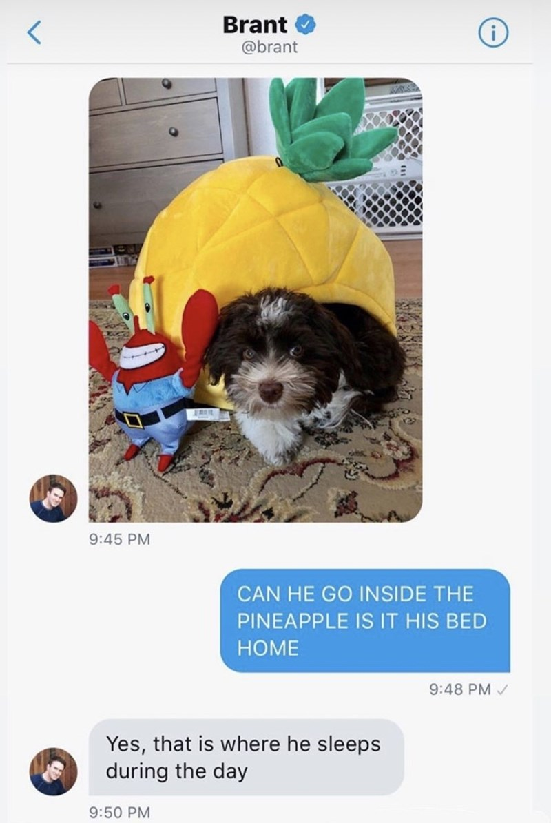 Dog - Brant i @brant 9:45 PM CAN HE GO INSIDE THE PINEAPPLE IS IT HIS BED НОME HOME 9:48 PM Yes, that is where he sleeps during the day 9:50 PM