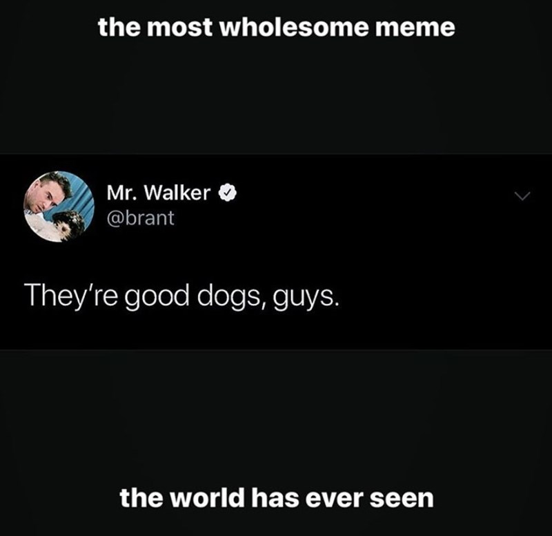 Text - the most wholesome meme Mr. Walker @brant They're good dogs, guys. the world has ever seen