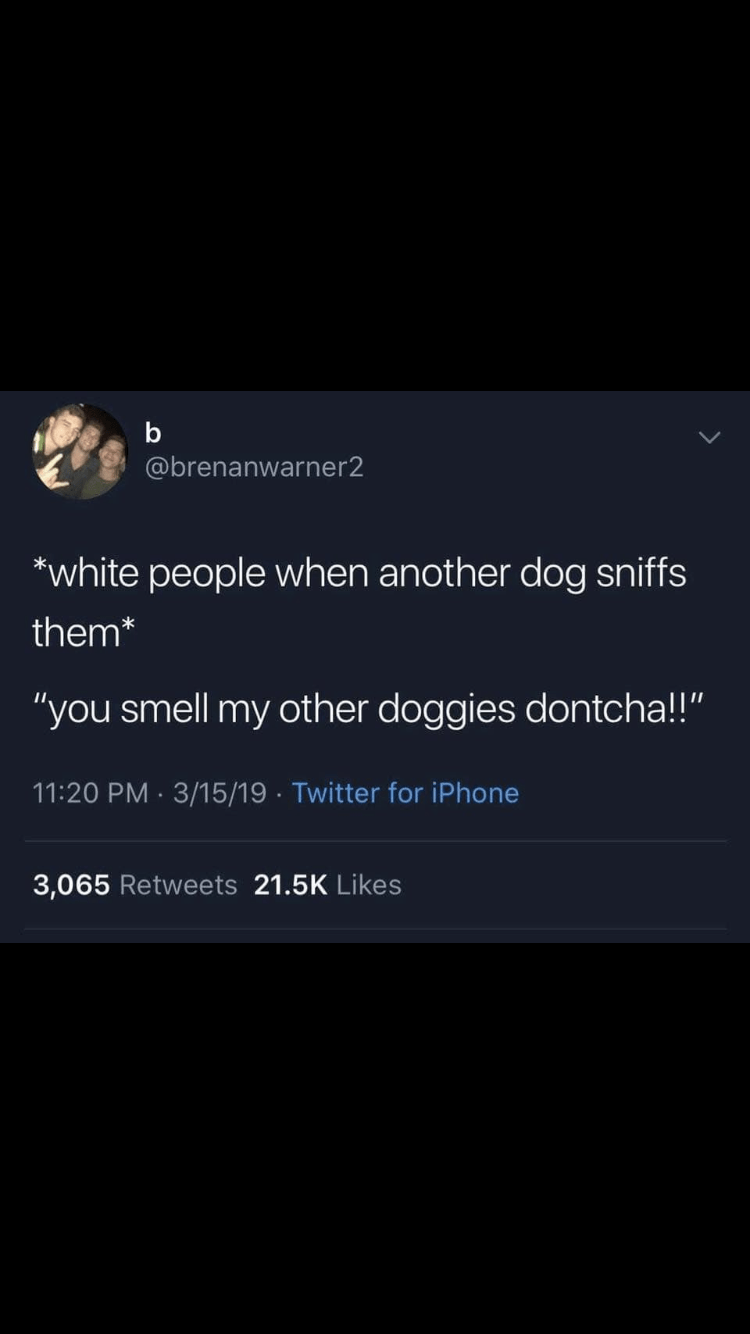 """Text - b @brenanwarner2 white people when another dog sniffs them* """"you smell my other doggies dontcha!!"""" 11:20 PM 3/15/19 Twitter for iPhone 3,065 Retweets 21.5K Likes"""