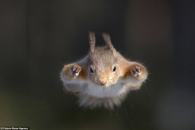 Squirrel - O Caters News Agency