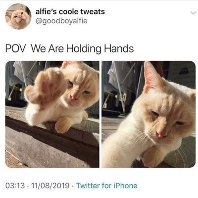 Cat - alfie's coole tweats @goodboyalfie POV We Are Holding Hands 03:13 11/08/2019 Twitter for iPhone
