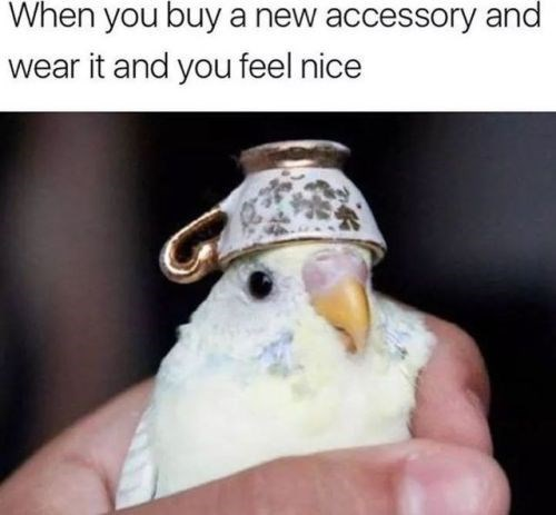 Parrot - When you buy a new accessory and wear it and you feel nice