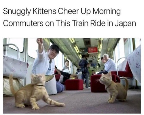 Dog - Snuggly Kittens Cheer Up Morning Commuters on This Train Ride in Japan