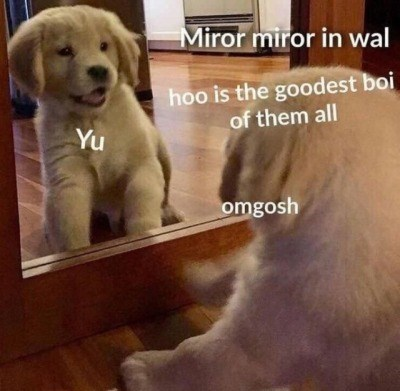 Dog breed - Miror miror in wal hoo is the goodest boi of them all Yu omgosh