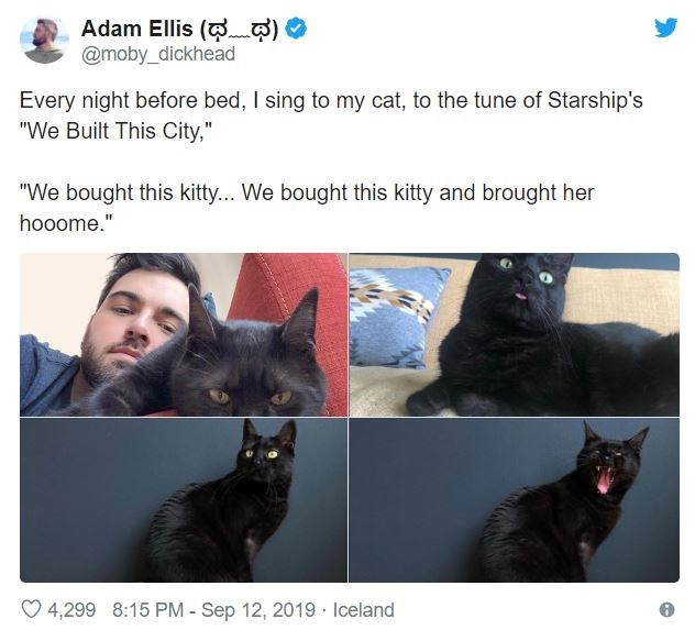 """Cat - Adam Ellis ( @moby_dickhead Every night before bed, I sing to my cat, to the tune of Starship's """"We Built This City,"""" """"We bought this kitty... We bought this kitty and brought her hooome."""" 4,299 8:15 PM - Sep 12, 2019 Iceland"""