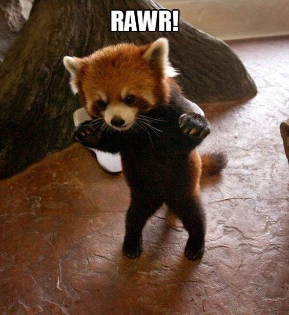 Mammal - RAWR!