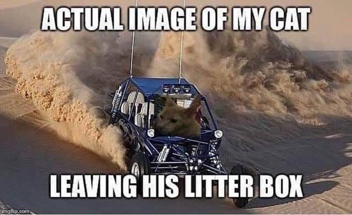 cat memes - 9359691264