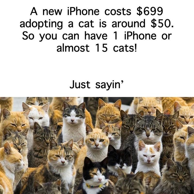 cat memes - 9359692032