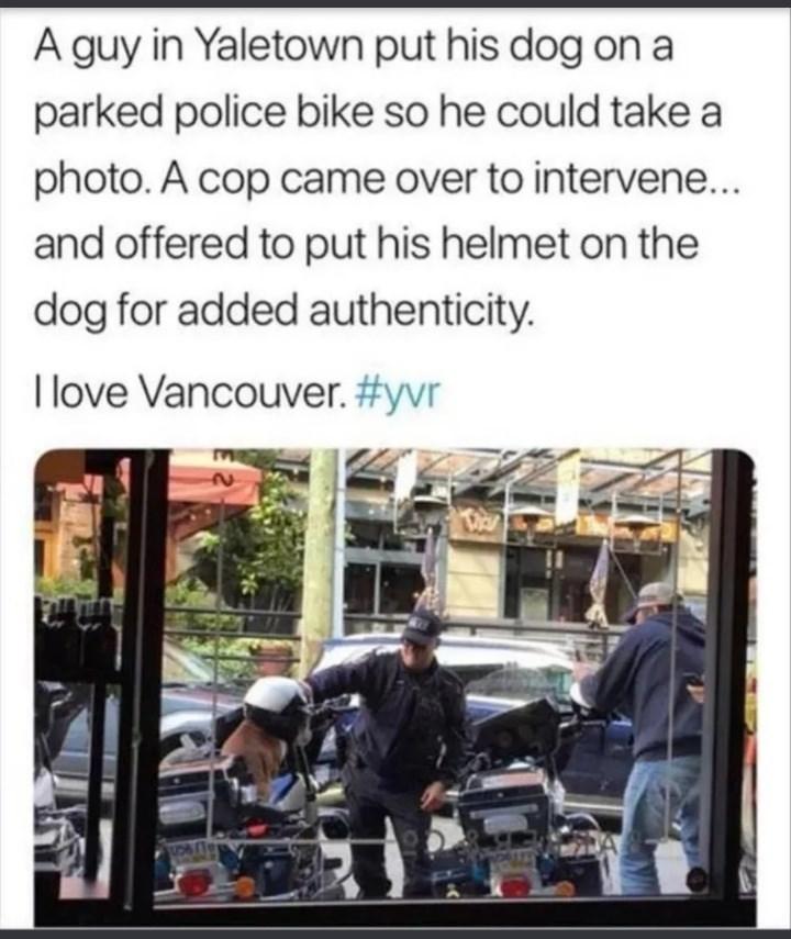 dog memes - 9359700480