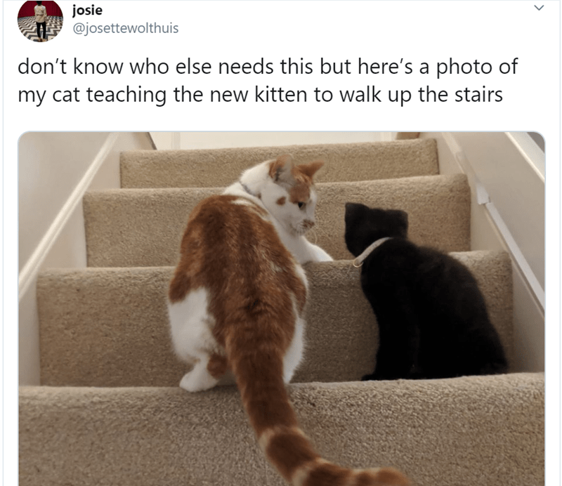 Cat - josie @josettewolthuis don't know who else needs this but here's a photo of my cat teaching the new kitten to walk up the stairs