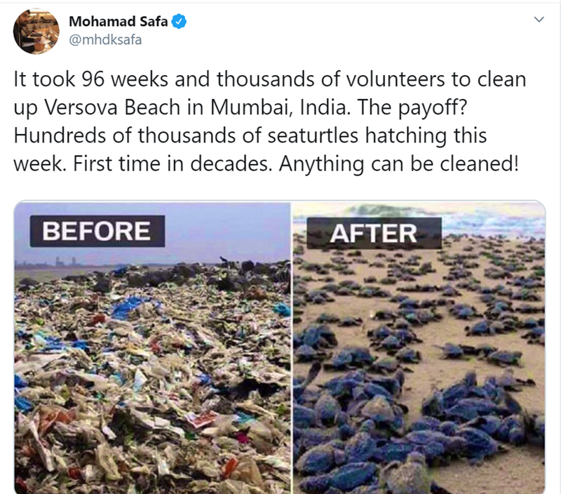 Adaptation - Mohamad Safa @mhdksafa It took 96 weeks and thousands of volunteers to clean up Versova Beach in Mumbai, India. The payoff? Hundreds of thousands of seaturtles hatching this week. First time in decades. Anything can be cleaned! BEFORE AFTER