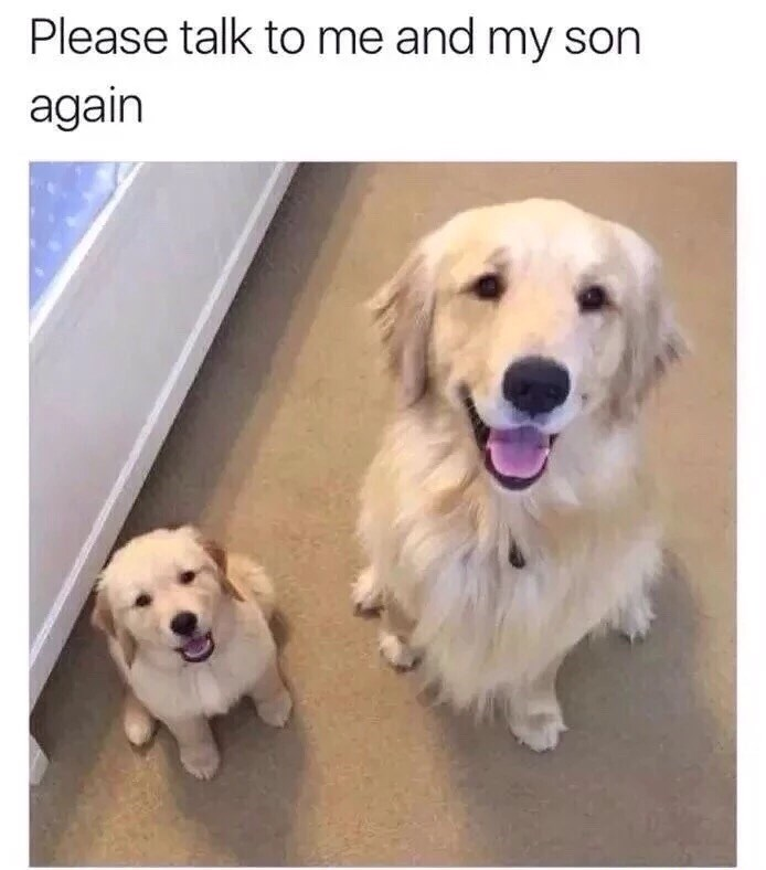 Dog - Please talk to me and my son again