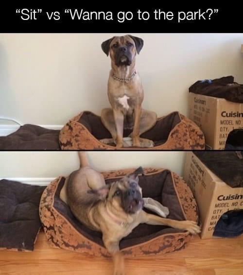 """Dog - """"Sit"""" vs """"Wanna go to the park?"""" rinr Cuisin MODEL NO OTY BAT MA Cuisin MODEL NO C OTY BAT MA CA"""