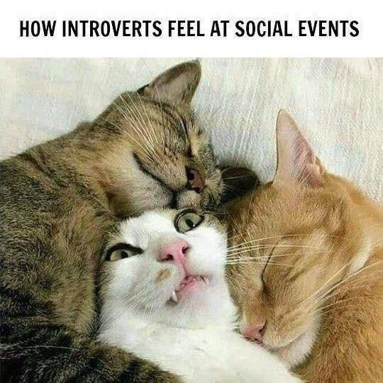 cat memes - 9360074496