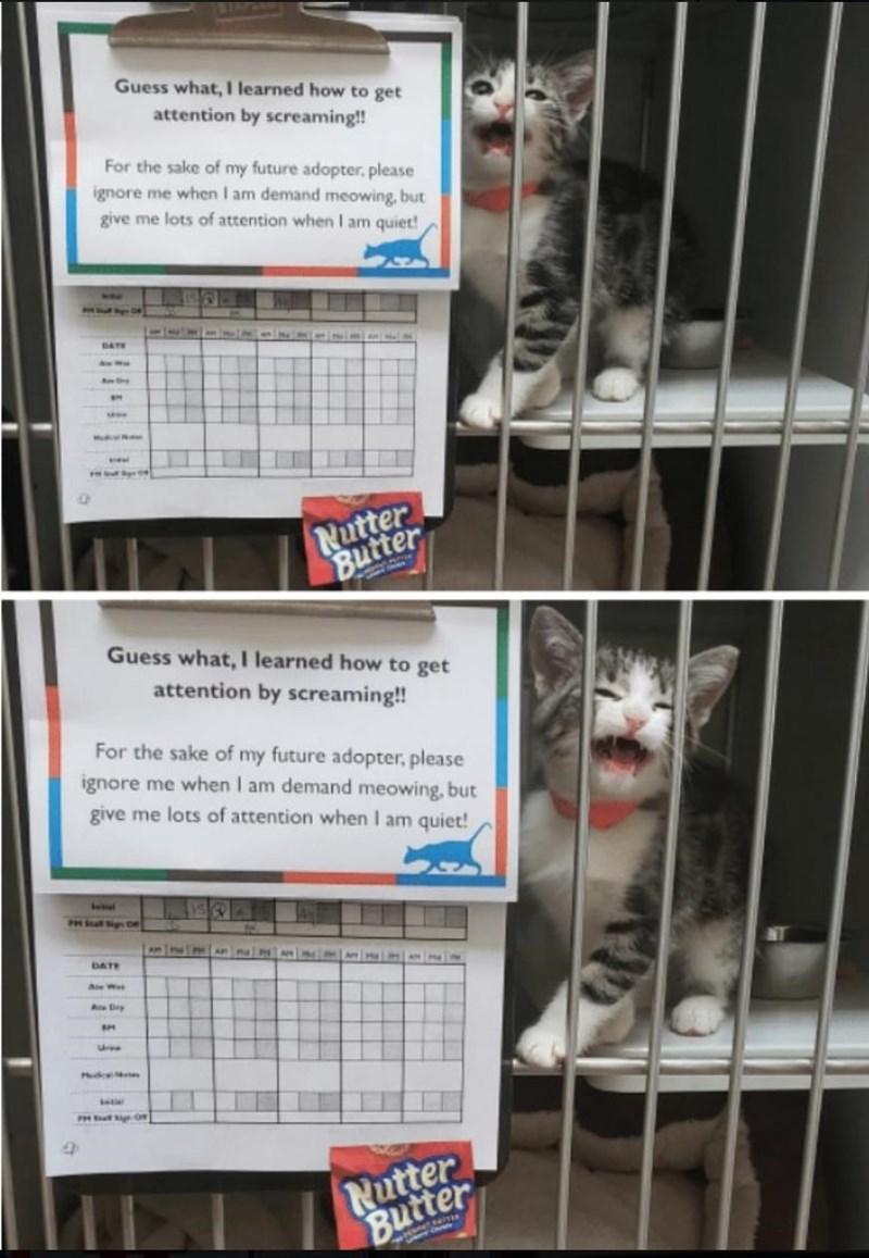 cat memes - 9360079104