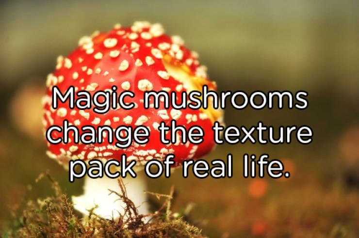 Nature - Magic mushrooms change the texture pack of real life.