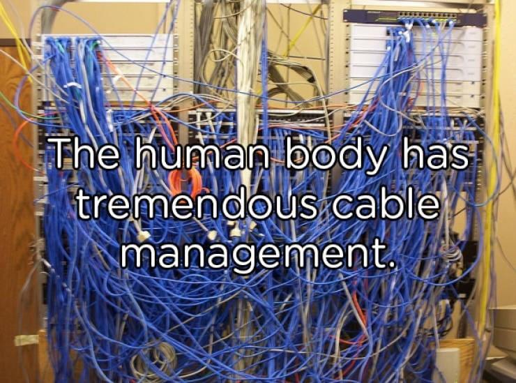 Cable management - The human body has tremendous.cable management