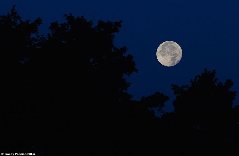 white harvest moon in blue sky surrounded by silhouetted trees