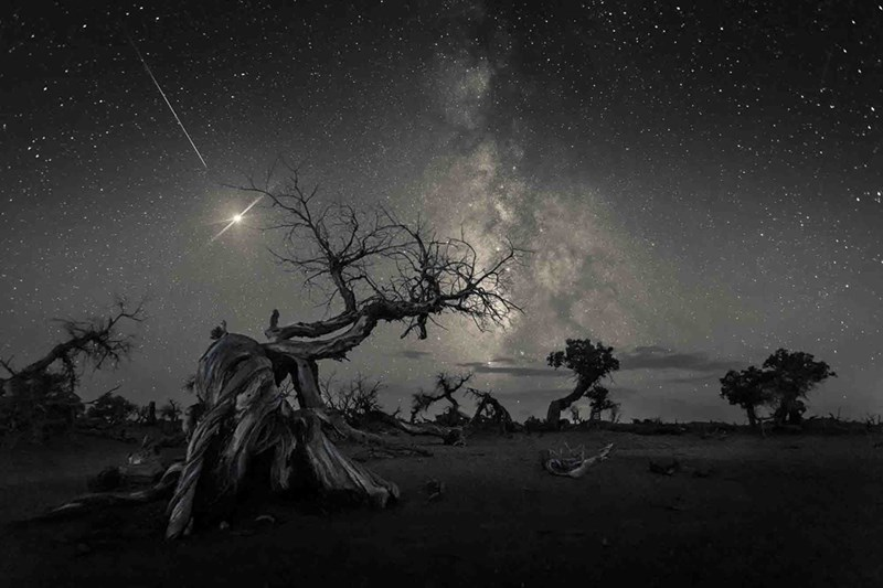 photo of tree skeletons against milky way and moon