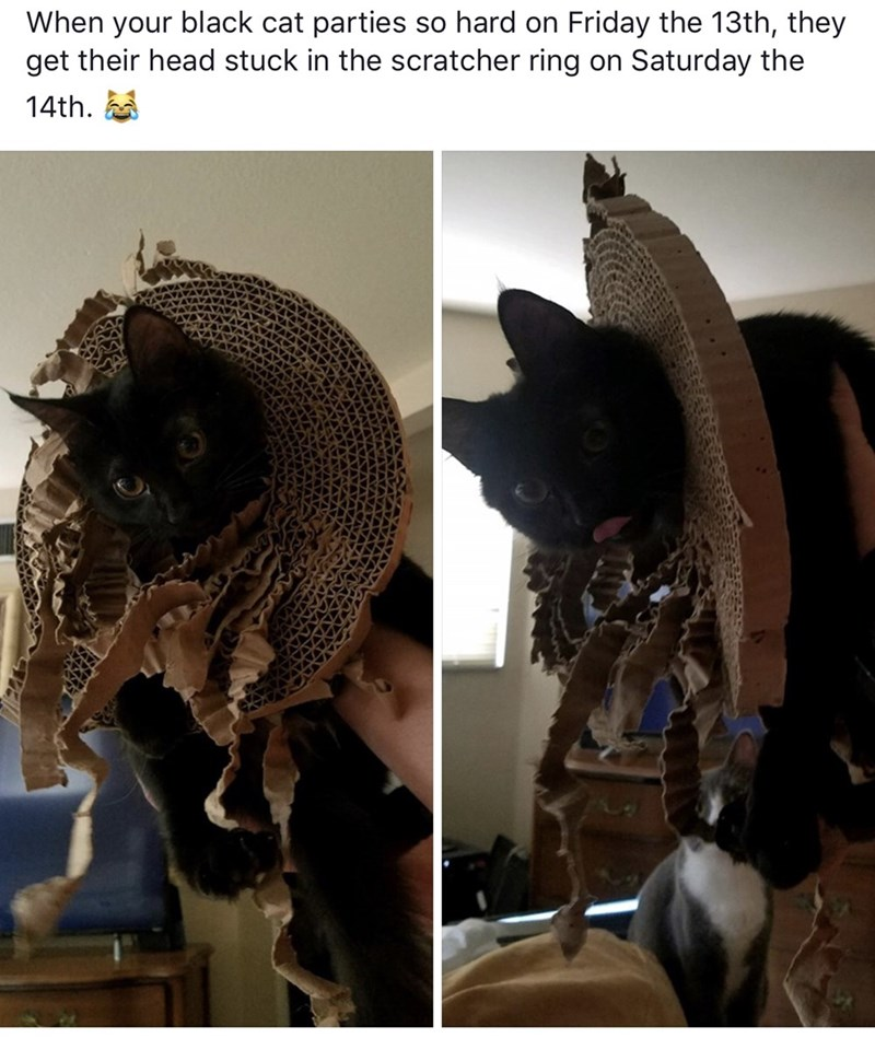 Helmet - When your black cat parties so hard on get their head stuck in the scratcher ring on Saturday the Friday the 13th, they 14th