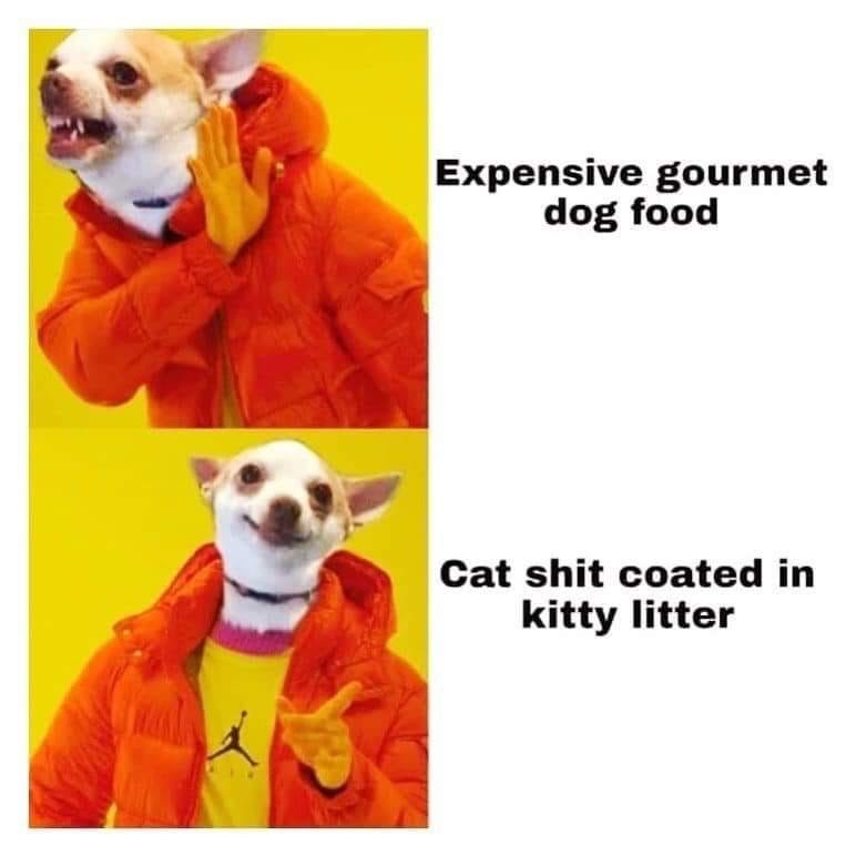Dog clothes - Expensive gourmet dog food Cat shit coated in kitty litter